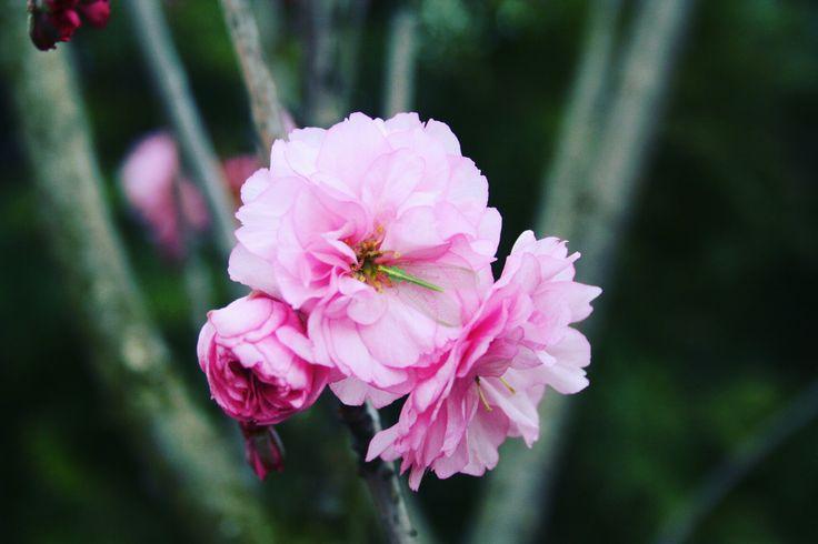 #flower 🌺