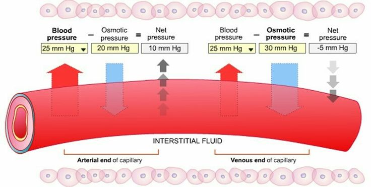Oncotic (Osmotic) vs Hydrostatic pressure