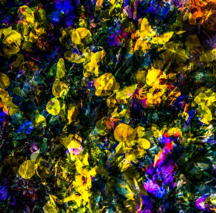 """""""Field of Flowers"""" by Caleb Dredge 