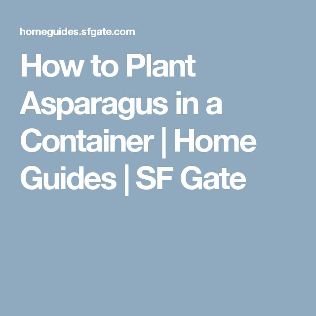 How to Plant Asparagus in a Container   Home Guides   SF Gate