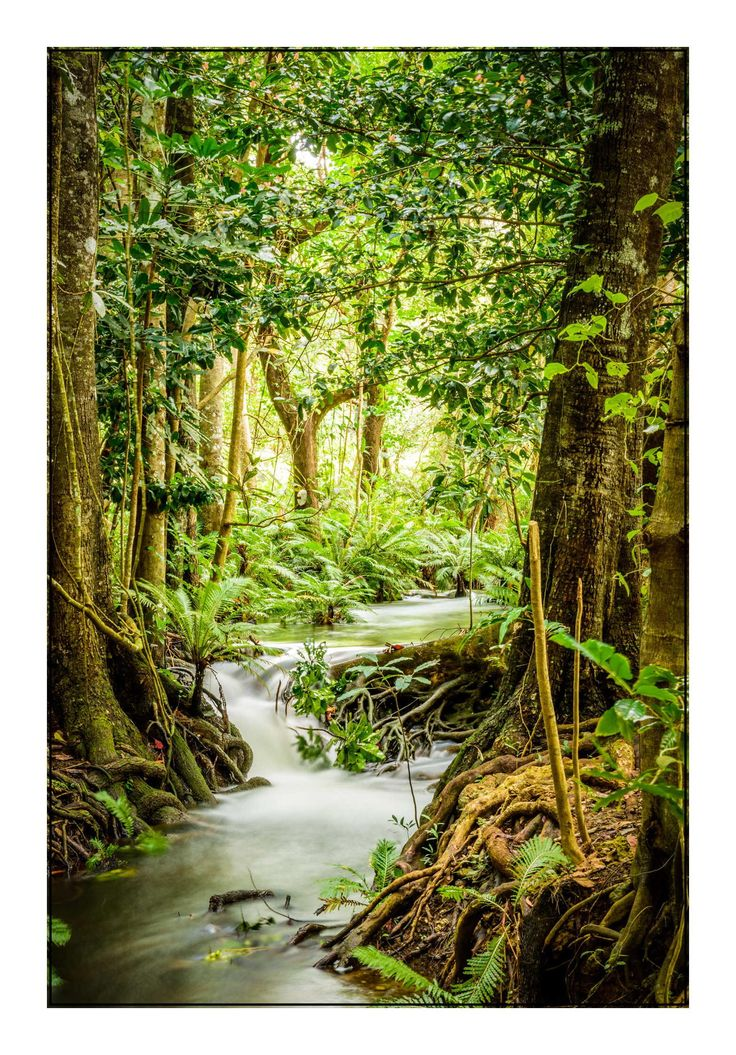 New Caledonia forest - long exposure by G-bey on 500px