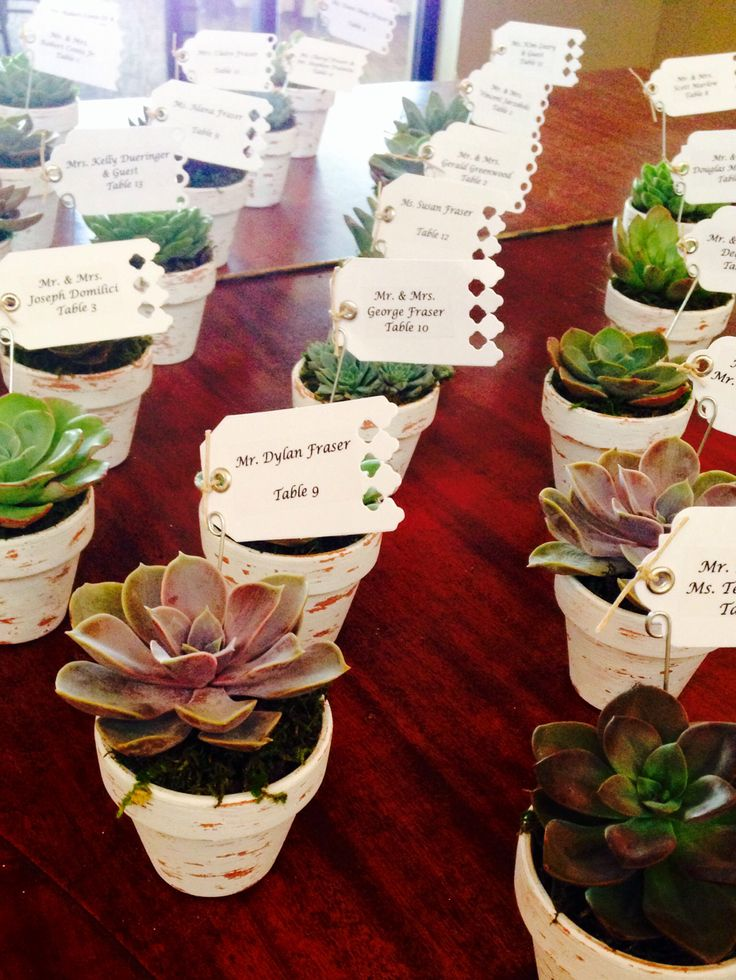 succulent wedding favors or placeholders