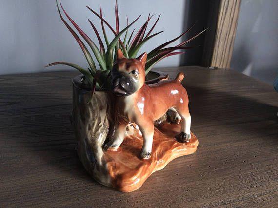 Vintage Boxer Dog planter succulent holder airplant holder