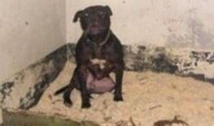 The fate of Lennox will be determined tomorrow. Click for the full story.