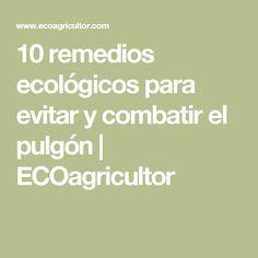 10 remedios ecológicos para evitar y combatir el pulgón | ECOagricultor