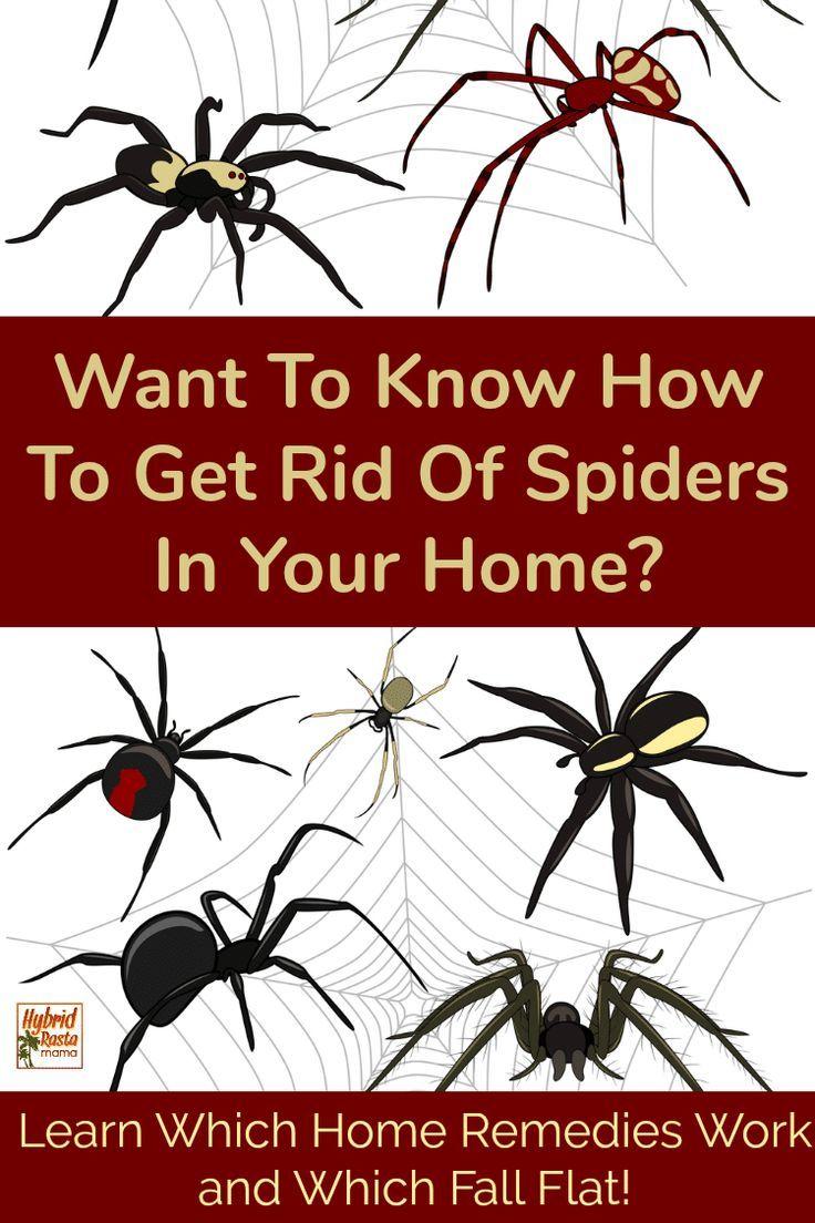 16ad1b9f39cbd68210650d61053722e7 - How To Get Rid Of Spiders From Your Car