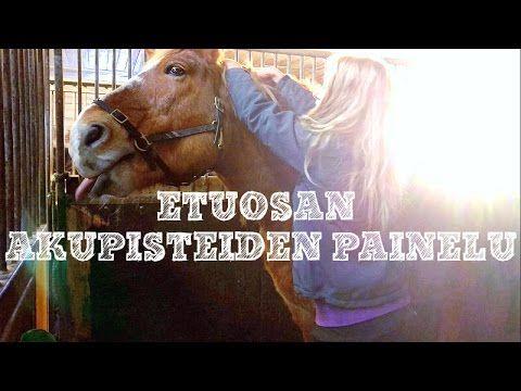 Hevosen niskan ja kaulan alue olisi tärkeä saada rennoksi, sillä kaulassa on paljon lihaksia, jotka vaikuttavat ratsastessa paitsi kaulan myös etujalkojen toimintaan. Kouluratsuilla kaula ja niska kuuluuvat selän ja vatsan alueen lihaksien ohella eniten rasittuviin lihaksiin, sillä ne tekevät töitä hevosta kootessa.  http://impulsoblogi.blogspot.com/2017/01/shiatsu-hevoshierontaa-videolla-osa-5.html?spref=fb  hevosshiatsu, hevoshieronta, hevoshieroja, Tampere, Jämsä