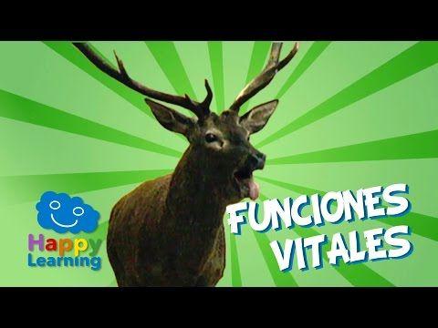 Vídeo donde podemos ver las funciones vitales de los seres vivos - YouTube #seresvivos #biodiversidad