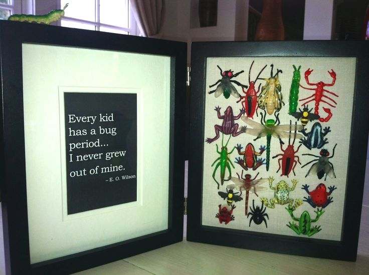 """""""Bug"""" and creature shadow box that folds in half. Has an E.O Wilson quote. Perfect for a child or nature loving adult (read quote)."""