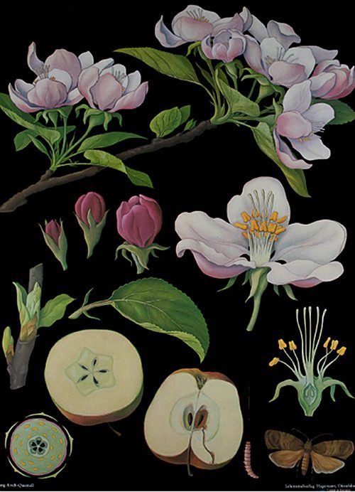 vintage educational posters for the Art of Instruction. The book's charts cover subjects ranging from the anatomy of a tulip or apple tree to that of a hedgehog or starfish.