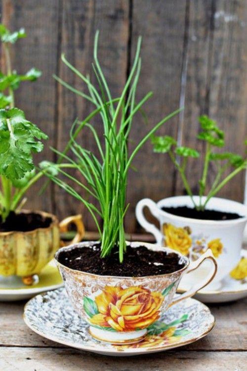 Grow herbs in teacups.