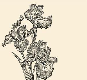 Beautiful iris tattoo design