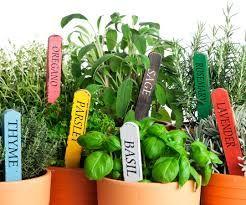 Gorgeous Edible Indoor Gardens  Scoopis Stories
