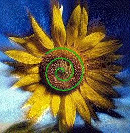 MathArt Ch. 1 Geometric Figures  seeds grow in spirals