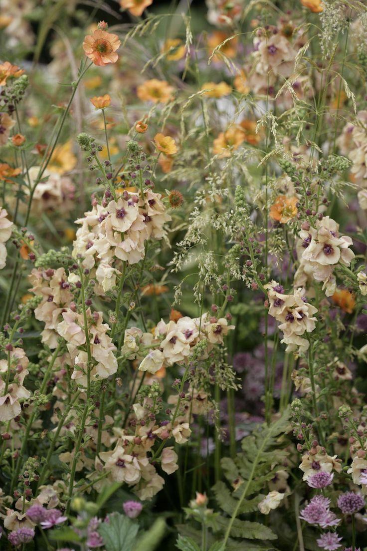 The 15 best landscaping images on Pinterest   Gardening, Back garden ...