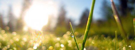 Spring Macro Green Grass Dew Facebook Covers - Facebook Covers - FBcoverlover.com/maker