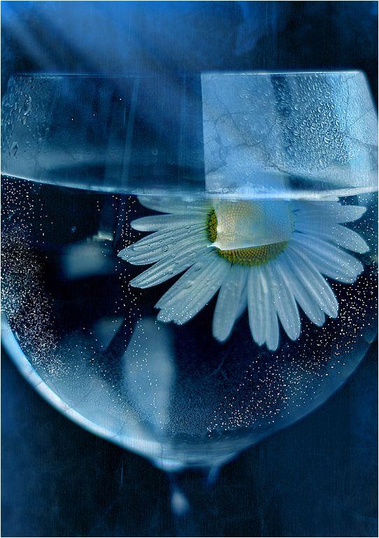 Lovely photo :)