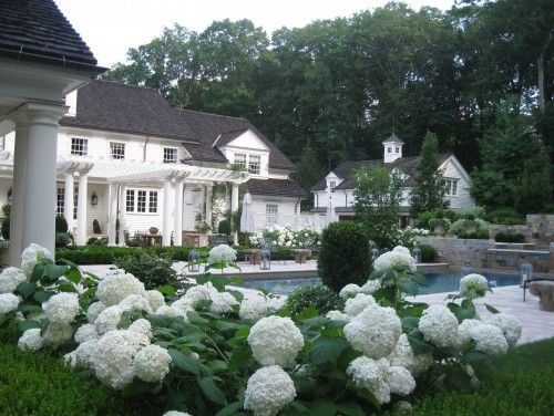 Boxwood and white hydrangeas make a classic combo with a for Classic sliders yard house