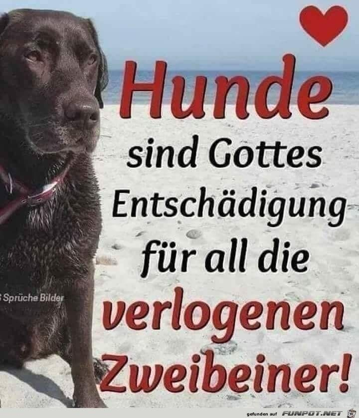 ein Bild für & # 39; s Herz & # 39; Die Hunde des Herzens sind Gottes Entschädigung. jpg – Ei …   – Die Welt der Hunde