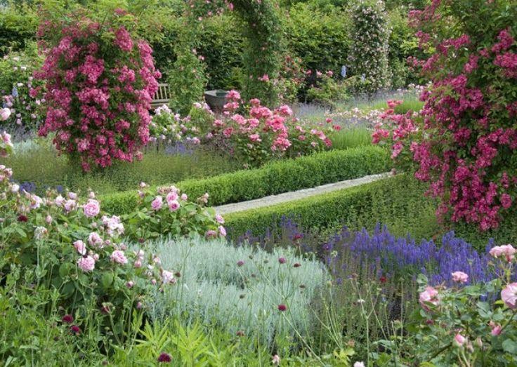 Des rosiers adaptés au climat et au sol