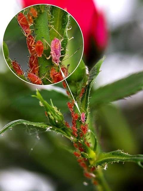 Astuces de jardinage avec du bicarbonate de soude – Gigi R