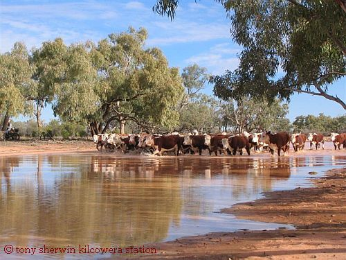 Outback Cattle Station in Australia Swam and rode horses here.