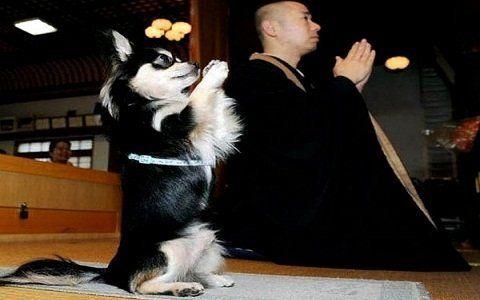 Tips cara melatih anjing agar berdoa http://www.anjinglovers.com/cara-melatih-anjing-berdoa/  #anjing #dog #AnjingLovers #pet #pelatihananjing #anjingberdoa #caramelatihanjingberdoa