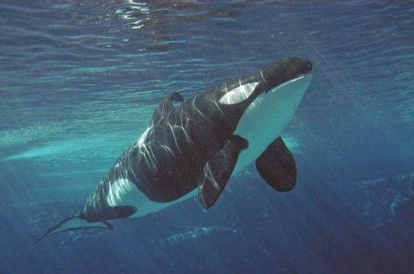 Major Schools Are Debunking SeaWorld's False Claims