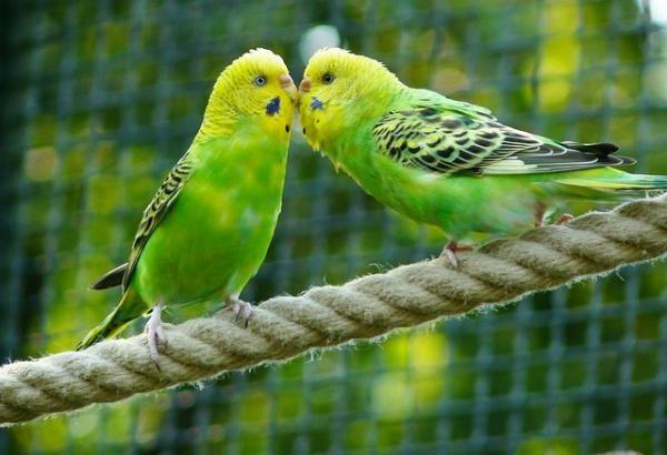 Aves que comen semillas - Granívoros - ExpertoAnimal