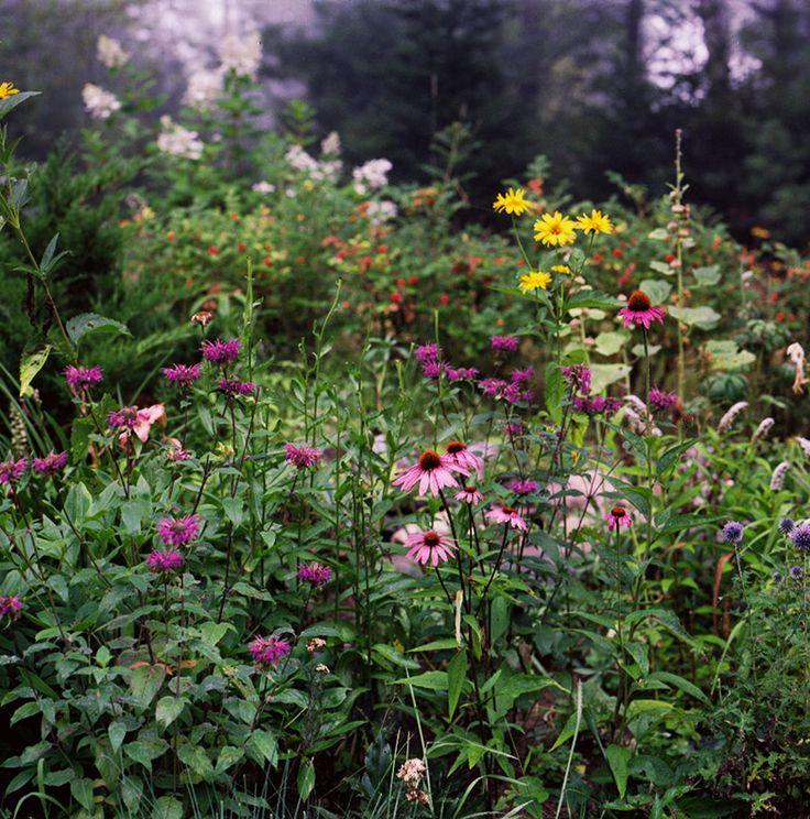 Echinacea, Begamot, Hollyhock, etc. From Jonathan Levitt.: Flowers Gardens, Perennials Flowers, Summer Gardens, Flowers Pl, Meadow Flowers, Summer Beautiful, Dreams Gardens, Bees Gardens, Wild Flowers