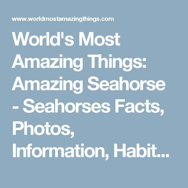 World's Most Amazing Things: Amazing Seahorse - Seahorses Facts, Photos, Information, Habitats, News