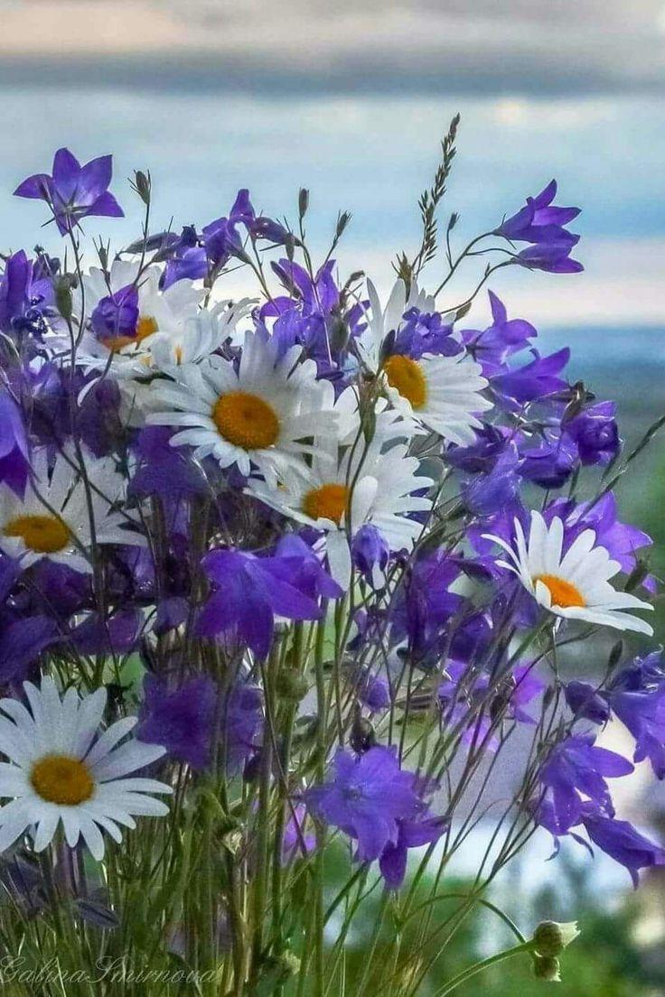 фото полевых цветов в хорошем качестве стиле пин-ап поможет