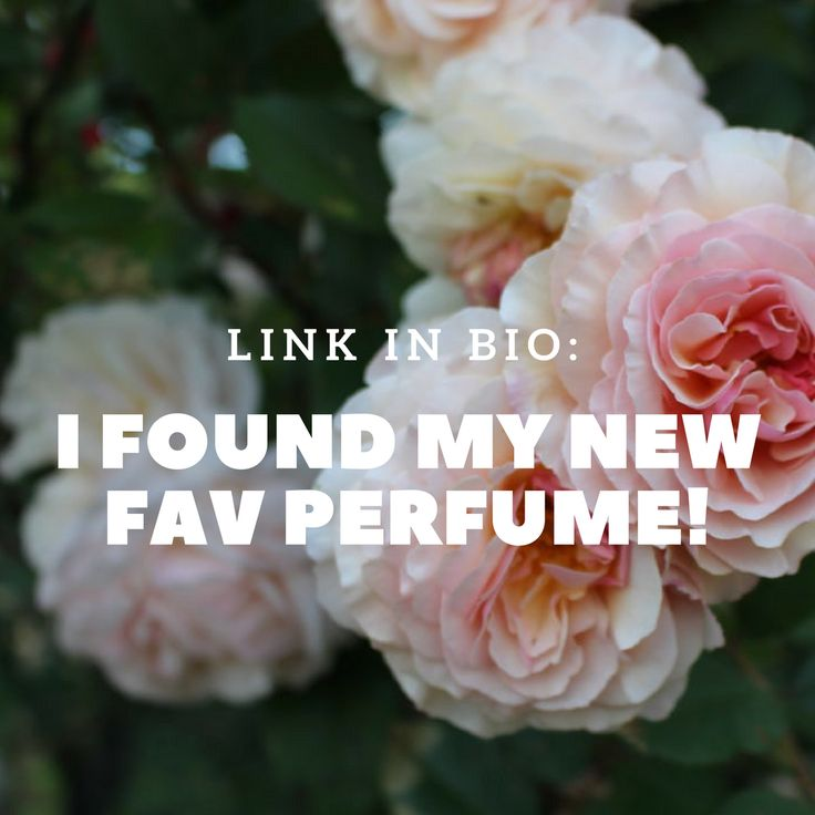 HOLY MOLY - I think I found my new favorite perfume!  Juliette Has a Gun Not a Perfume Eau de Parfum - $100 to $130. Thanks @birchbox!  Check out my unboxing and review: https://youtu.be/_ihy8gwH7I0 #birchbox #ipsy #ipsyglambag #unboxing #beauty #beautyproducts #lifestyle #productreview #monthlysubscription #subscription #subscriptionaddict #subscriptionboxes #makeup #Perfumes #bodyspray #style #shopping