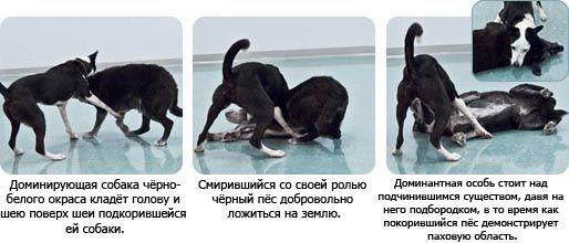 собаки выясняют отношения