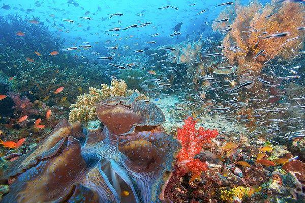 Keindahan Alam Bawah Laut Raja Ampat