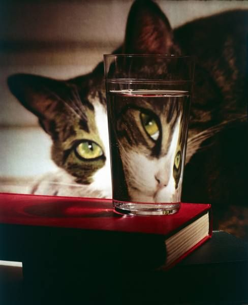 """Cat peering into glass, which reflects its image in reverse, creating perfect example of light refraction"" LIFE: Cat peering into glass - Hosted by Google"