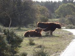 Zuid-Kennemerland bij Haarlem. Prachtig natuurgebied. Bij het bezoekerscentrum kun je speurtochten en GPS routes krijgen.