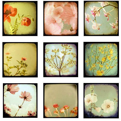 vintage flower photos