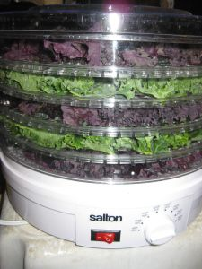 Dehydrator kale chips Really fast, dehydrator for 3 hrs, at 125. Kids love them!