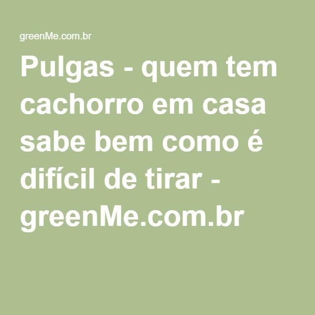 Pulgas - quem tem cachorro em casa sabe bem como é difícil de tirar - greenMe.com.br