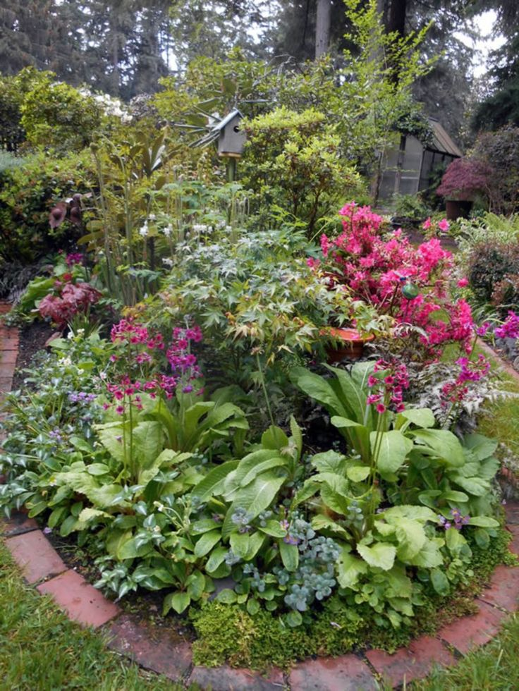 873 best shade gardens images on pinterest