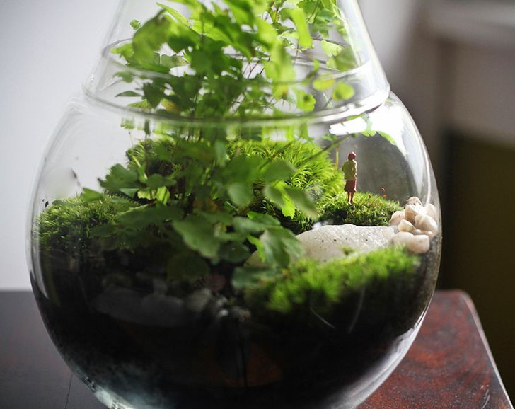 Did you know that you can transform any glass container into a terrarium? Here are some tips for making your own so you can green up your space year-round.