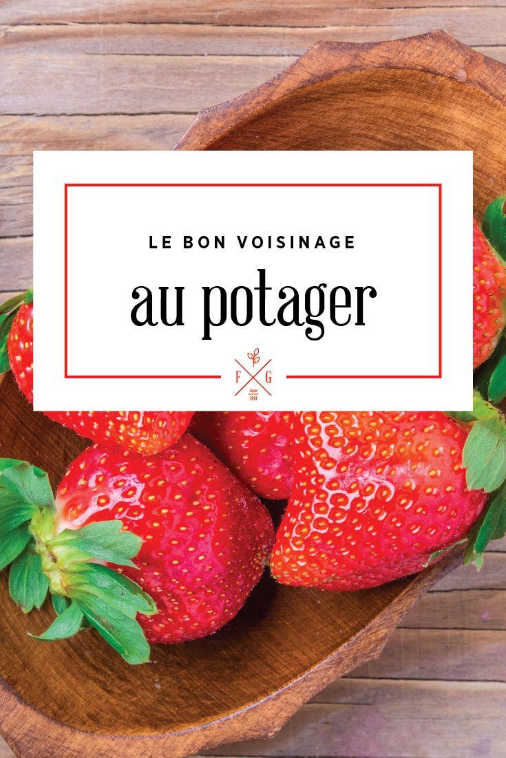 Le bon voisinage au potager (fruits, légumes et fines herbes). La Ferme Grover, Laval.
