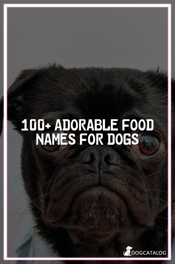 100 Adorable Food Names For Dogs Dogs Dog Ages Best Dog Breeds
