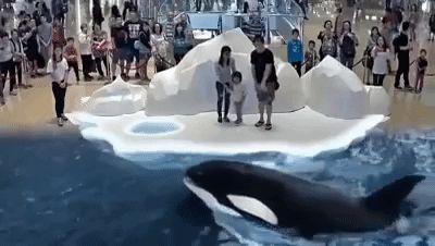 Este zoológico virtual en 7D podría ser una gran alternativa para evitar encerrar a los animales