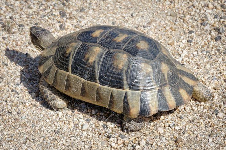 dove trovare le tartarughe in Sardegna