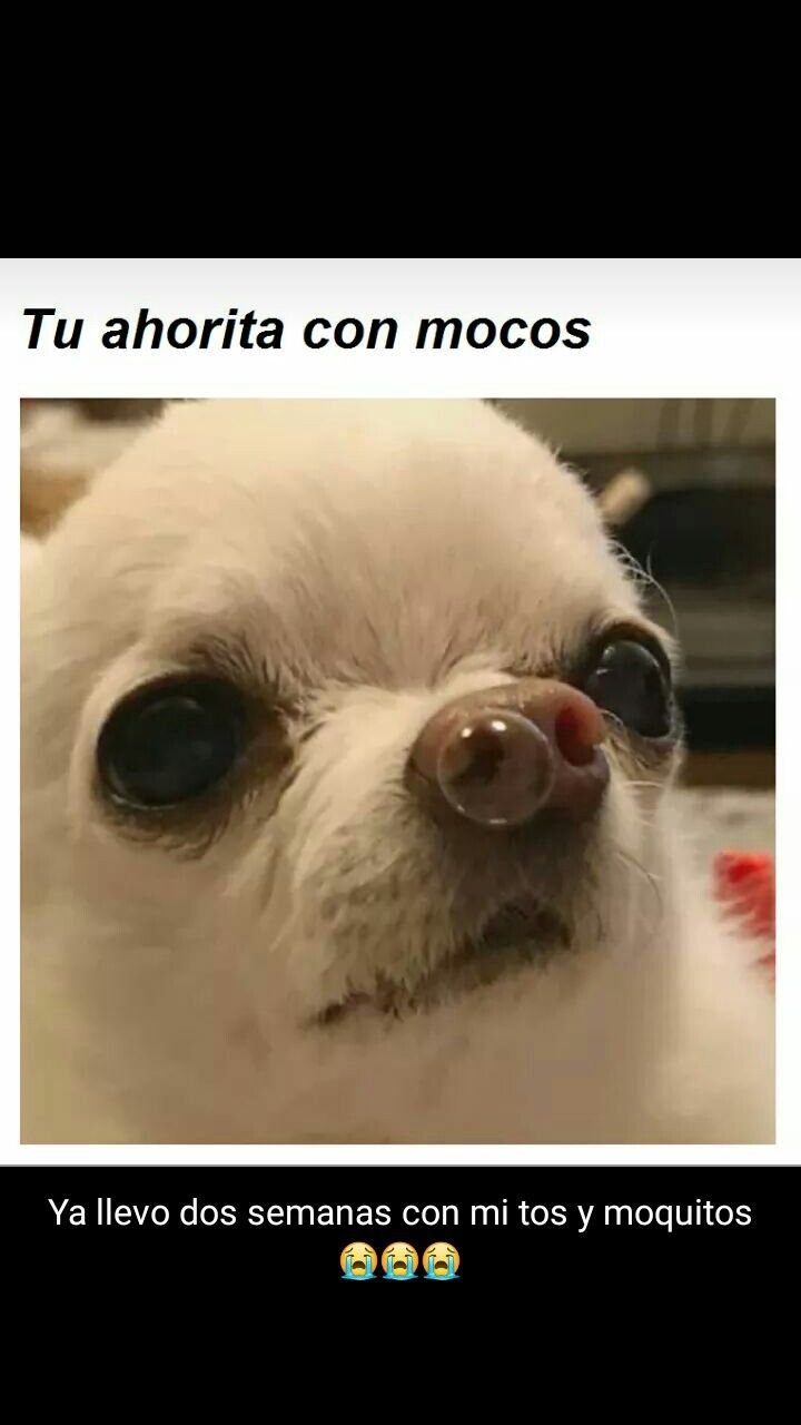 Pin By Carmen On Otras Verdades Funny Animal Memes Dumb Tweets Funny Animals