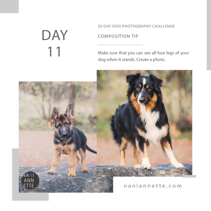 Day 11 of 30 Day Dog Photography Challenge!  Composition tip: Make sure you can see all four legs of your dog when it stands. Create a photo.  Join the fun and share your photos in Instagram using #30daydogchallenge.