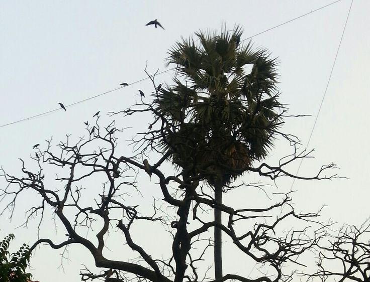 Drytree#hillroad#mumbai