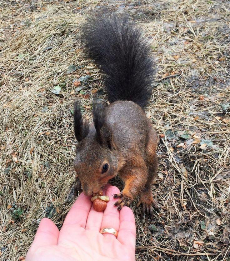 Eichhörnchen füttern in Arosa